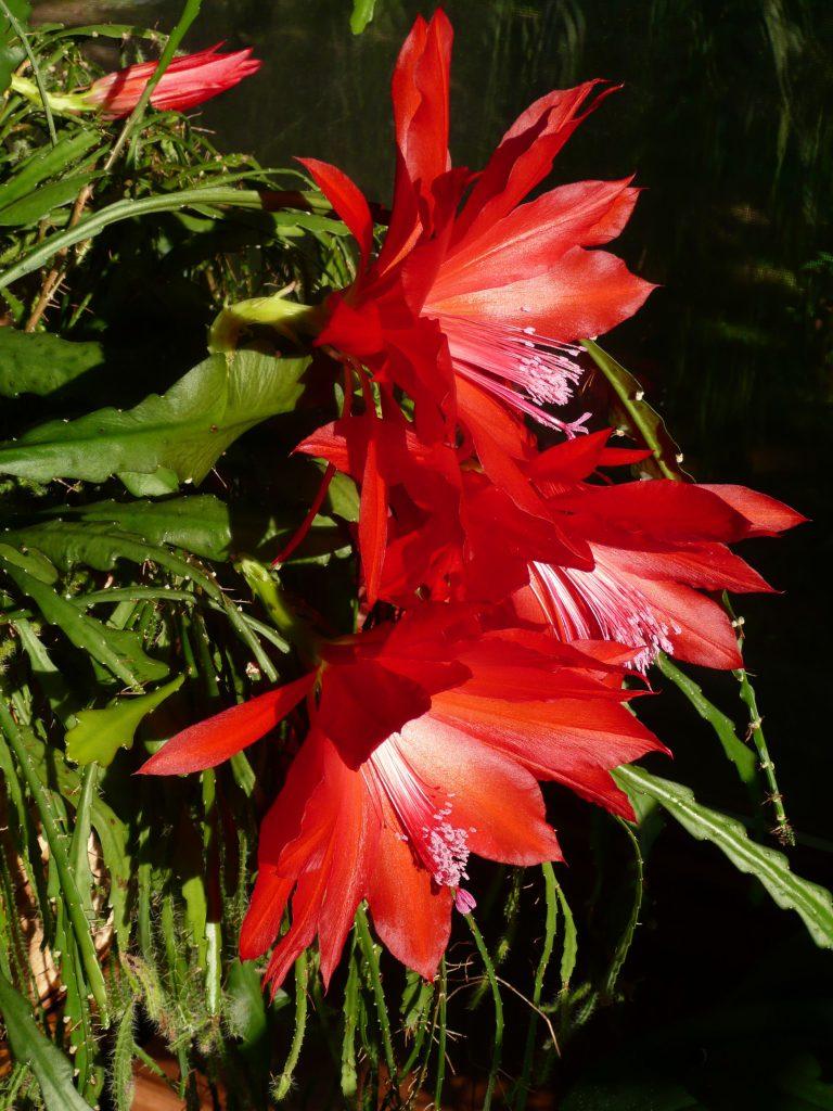 flowering cactus plant
