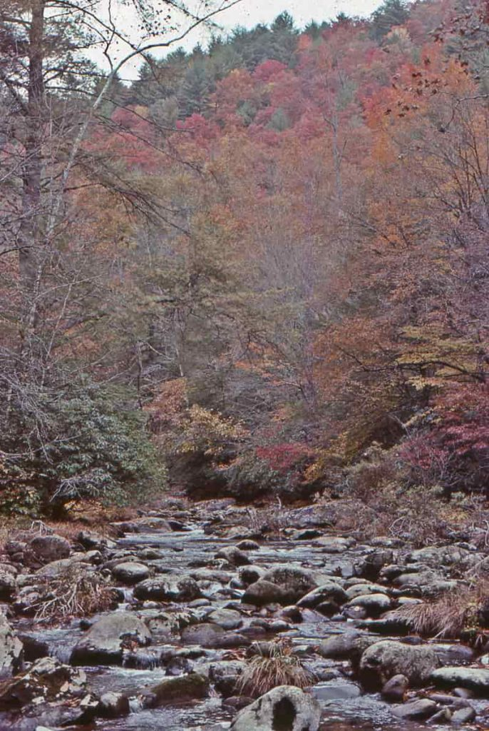 creek running through fall leafed trees